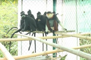 Nhà họ khỉ ở Phong Nha – Kẻ Bàng